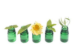 Bottle of essential oil with herb fresh plants and flowers Stock Images