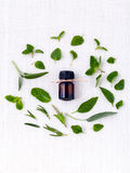Bottle of essential oil with herb holy basil leaf, rosemary,oregano, sage,basil and mint on white background. royalty free stock photo
