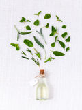Bottle of essential oil with herb holy basil leaf, rosemary,oreg Royalty Free Stock Photography