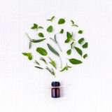 Bottle of essential oil with herb holy basil leaf, Stock Image
