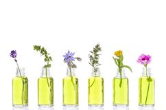 Bottle of essential oil with herbs and flowers set up on white background . stock photography