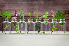 Bottle of essential oil with herbs holy basil flower, basil flow Royalty Free Stock Photography