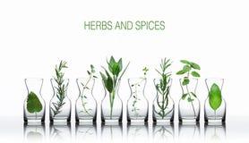Bottle of essential oil with herbs lemon balm, lavender, oregano stock images