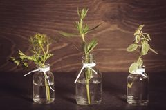 A bottle of essential oil with herbs, parsley, thyme, dill, hyssop, set on an old wooden background. Cooking, alternative medicine. Massage, aromatherapy stock photo