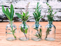 Bottle of essential oil with herbs rosemary, sage,holy basil and Stock Photos