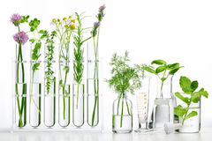Bottle of essential oil with herbs stock image