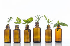 Bottle of essential oil with herbsON WHITE stock images