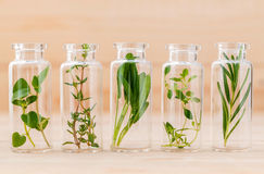 Bottle of essential oil lemon thyme ,thyme ,oregano,rosemary . Stock Photos
