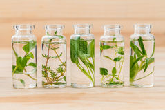 Bottle of essential oil lemon thyme ,thyme ,oregano,rosemary and Stock Photo