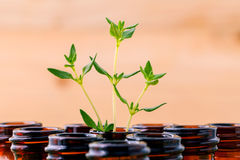 Bottle of essential oil and thyme  leaf  shallow depth of field Stock Images