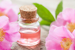 Bottle of essential roses oil and pink wild rose Royalty Free Stock Photo
