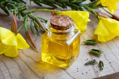A bottle of evening primrose oil with evening primrose flowers a Royalty Free Stock Images