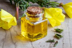 A bottle of evening primrose oil with fresh evening primrose flo. A bottle of evening primrose oil with fresh oenothera biennis flowers, pods and seeds royalty free stock image