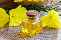 A bottle of evening primrose oil with fresh evening primrose flo Stock Photos