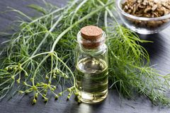 A bottle of fennel essential oil with fresh fennel tops and seed Stock Photography
