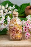 A bottle filled with horse chestnut blossoms and alcohol, to pre stock photography