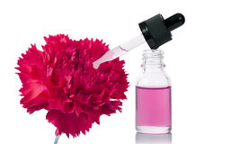 Bottle of flower essential oil with fresh carnation flowers. Beauty treatment royalty free stock images
