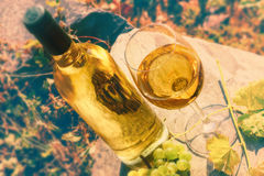 Bottle and full glass of white wine over vineyard background. Wi Stock Photo