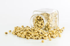 Bottle full of Soybeans Royalty Free Stock Photo