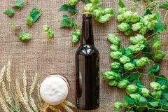 Bottle and Glass beer with Brewing ingredients. Hop flower with wheat. Top view. Royalty Free Stock Photography