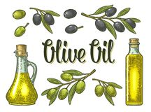 Bottle glass oil with cork stopper and branch olive with leaves. Bottle glass oil with cork stopper and branch with leaves. Olive oil calligraphic handwriting royalty free illustration