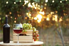 Bottle and glass of red wine with fresh grapes. On wooden table in vineyard stock image