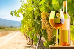 White wine and vineyard royalty free stock image