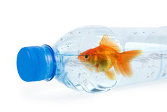 Bottle and gold fish Royalty Free Stock Image