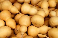 Bottle gourd calabash Royalty Free Stock Image