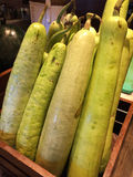 Bottle gourds Royalty Free Stock Image