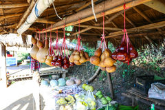 Bottle gourds selling at local vegetable shop at Mae Sa Long mountain in Chiang rai, Thailand. Many bottle gourds have been offered to travelers at local royalty free stock photos