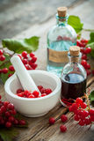 Bottle of Guelder rose tincture and mortar of red berries Stock Photos