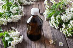 A bottle of hawthorn tincture with hawthorn flowers stock images