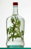 Bottle of herb rakia Stock Image