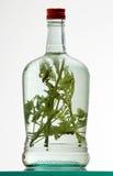 Bottle of herb rakia. Bottle of natural herb rakia Stock Image