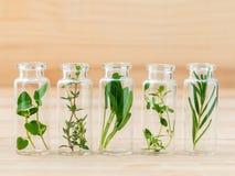 Bottle of herbs lemon thyme ,thyme ,oregano,rosemary andsage lea Royalty Free Stock Image