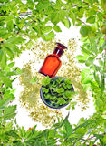 Bottle with homeopathy balm and wood plants Royalty Free Stock Image