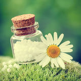Bottle of homeopathy globules and daisy flower on moss. Royalty Free Stock Photography
