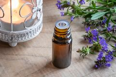A bottle of hyssop essential oil with fresh hyssop royalty free stock photos