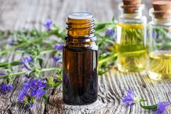 A bottle of hyssop essential oil with fresh blooming hyssop royalty free stock photos