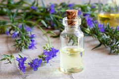 A bottle of hyssop essential oil with fresh blooming hyssop. A bottle of essential oil with fresh blooming hyssop royalty free stock photos