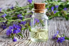 A bottle of hyssop essential oil with fresh blooming hyssop. A bottle of essential oil with fresh blooming hyssop twigs royalty free stock photos