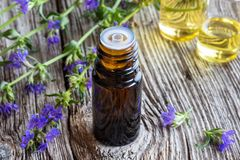A bottle of hyssop essential oil with fresh blooming hyssop stock photo