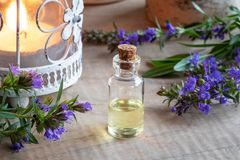 A bottle of hyssop essential oil with fresh blooming hyssop. A bottle of essential oil with fresh blooming hyssop twigs royalty free stock photography