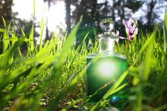 bottle with magical green potion in the forest at sunlight. Royalty Free Stock Photography