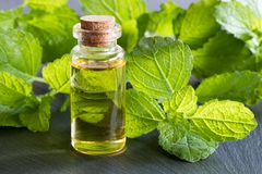 A bottle of melissa essential oil on a dark background. A bottle of melissa essential oil with fresh melissa leaves in the background royalty free stock photo