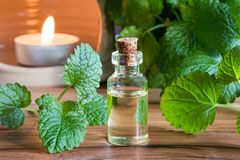 A bottle of melissa essential oil with fresh melissa. A bottle of melissa lemon balm essential oil with fresh melissa leaves and an aroma lamp royalty free stock images