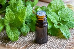A bottle of melissa essential oil with fresh melissa. A bottle of essential oil with fresh melissa twigs stock photos