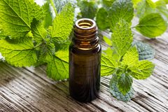 A bottle of melissa essential oil with fresh melissa leaves. A bottle of melissa lemon balm essential oil on white painted wood with fresh melissa leaves in the stock photos