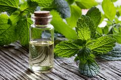A bottle of melissa essential oil with fresh melissa twigs. A bottle of melissa lemon balm essential oil with fresh melissa leaves on white painted wood Royalty Free Stock Images